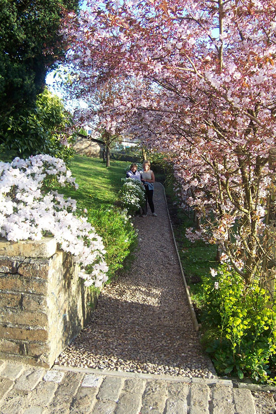 View towards cherry trees